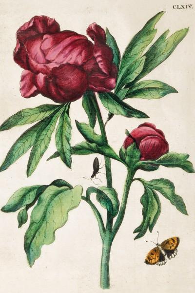 Briefkarten Rosenwelt Merian