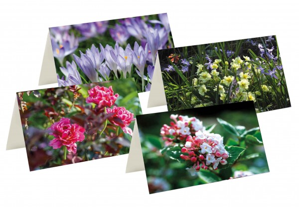 Briefkarten: Frühlingsstars