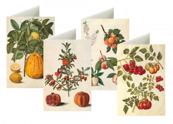 Briefkarten: Sommerfrüchte