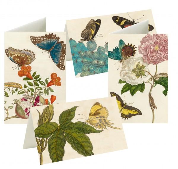 Briefkarten Wunderwelt Merian