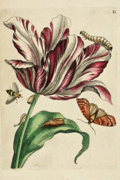 Briefkarten Frühlingswelt Merian