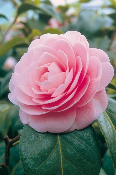 Briefkarten: Blütenträume