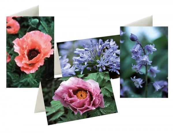 Briefkarten: Blütenzauber